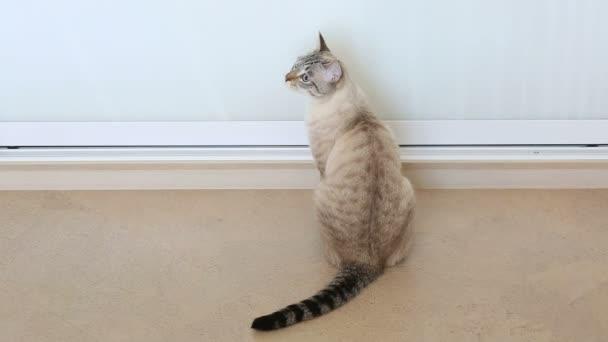 Beautiful funny striped cat.