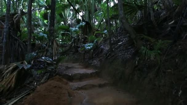 Vallee de mai Palmenwald in Praslin