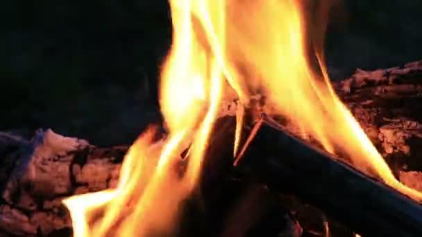 Krásný oheň ohně v přírodě