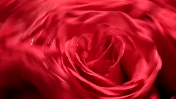 Beautiful bouquet of red roses with a reverse spinning rapidly.