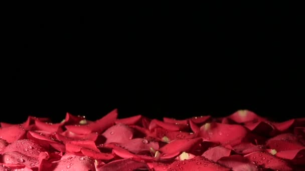 Rose falls to the background of the petals. Slow motion.