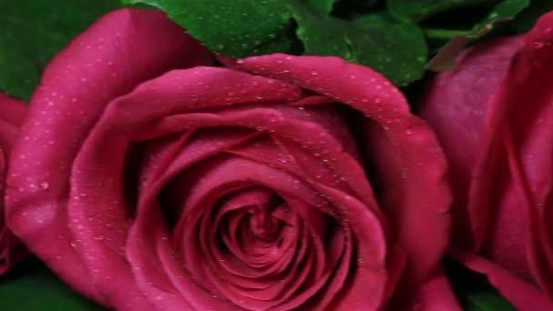 Romantikus ajándék arany gyűrű rózsaszín rózsa.