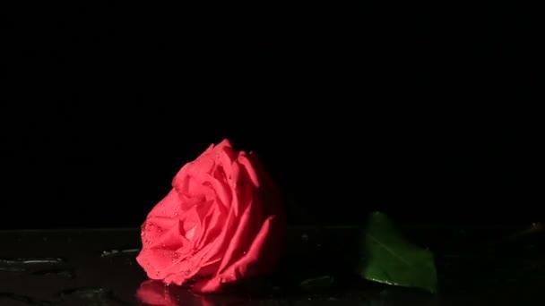 Rose spadne do vody. Zpomalený pohyb