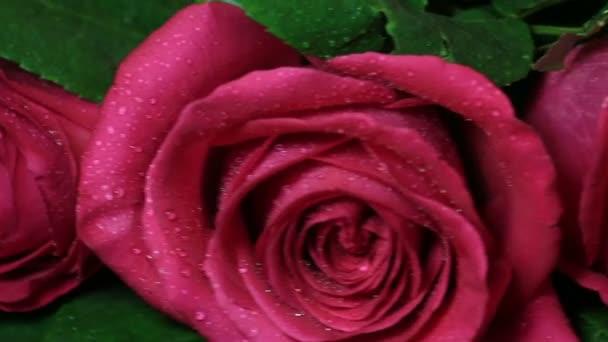 Krásnou kytici rudých růží je otočen.
