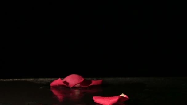 Růžové lístky, které spadají do vody. Zpomalený pohyb