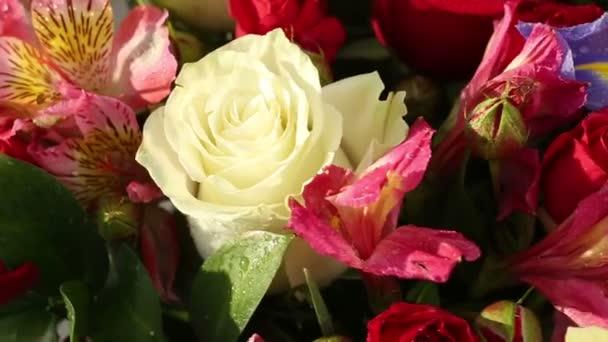 Krásnou kytici růží, iris a kosatců otočí
