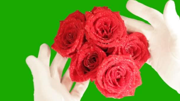 Rosen auf grünem Hintergrund