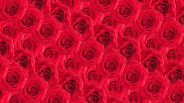 Růže. Animované pozadí.