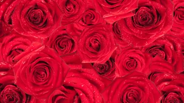 Roses. Animated background.