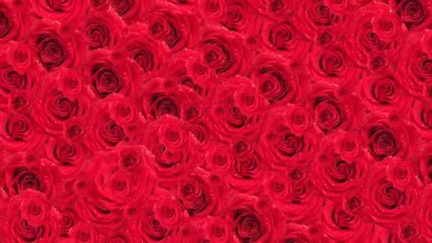 Roses. Animated background.