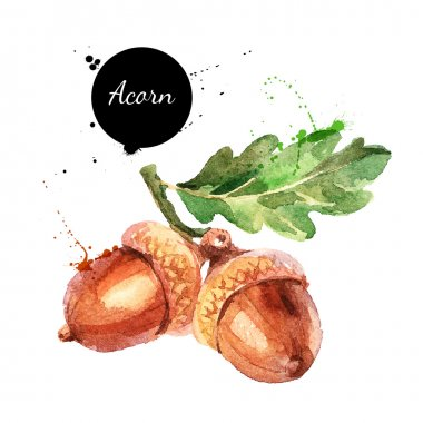 watercolor painting of acorn