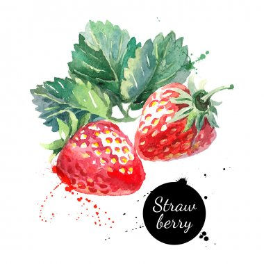 Hand drawn watercolor painting strawberries