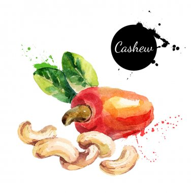 watercolor painting of cashew nut