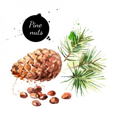 watercolor painting of pine nuts