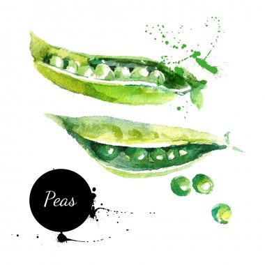 Peas. Hand drawn watercolor painting on white background