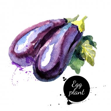 Eggplants. Hand drawn watercolor painting on white background.