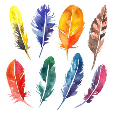 Watercolor feathers set.