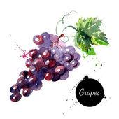 Hand drawn watercolor painting grapes