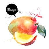 Fotografie Hand drawn watercolor painting mango