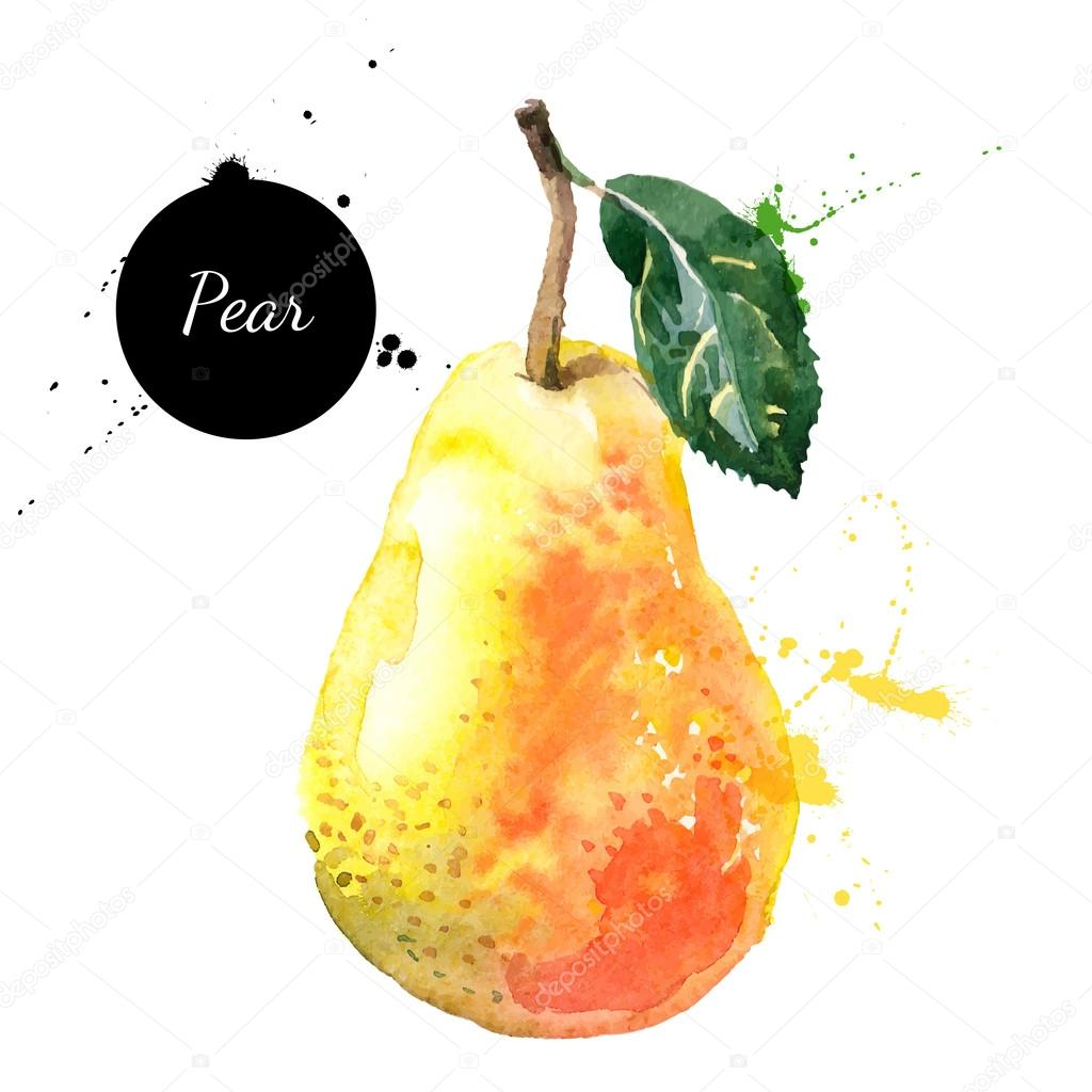 Hand drawn watercolor painting pear