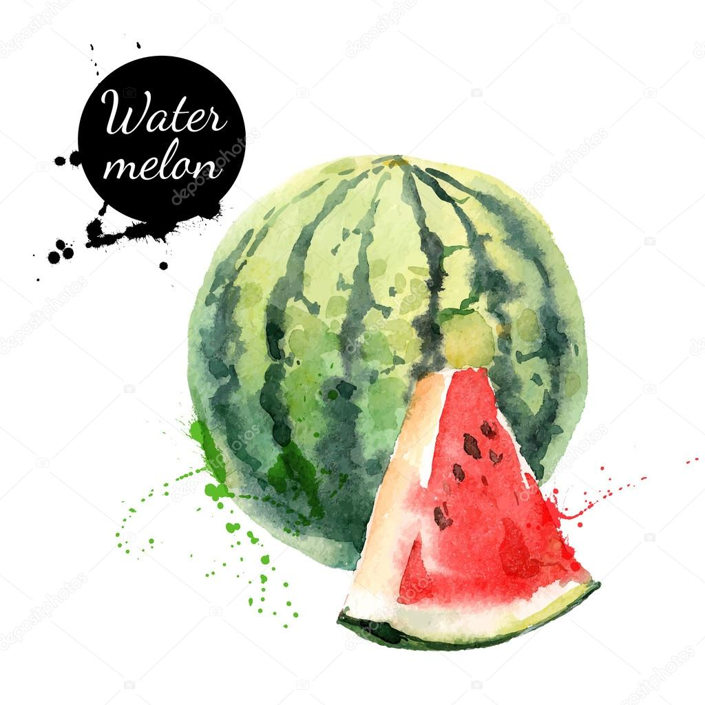 Hand drawn watercolor painting watermelon
