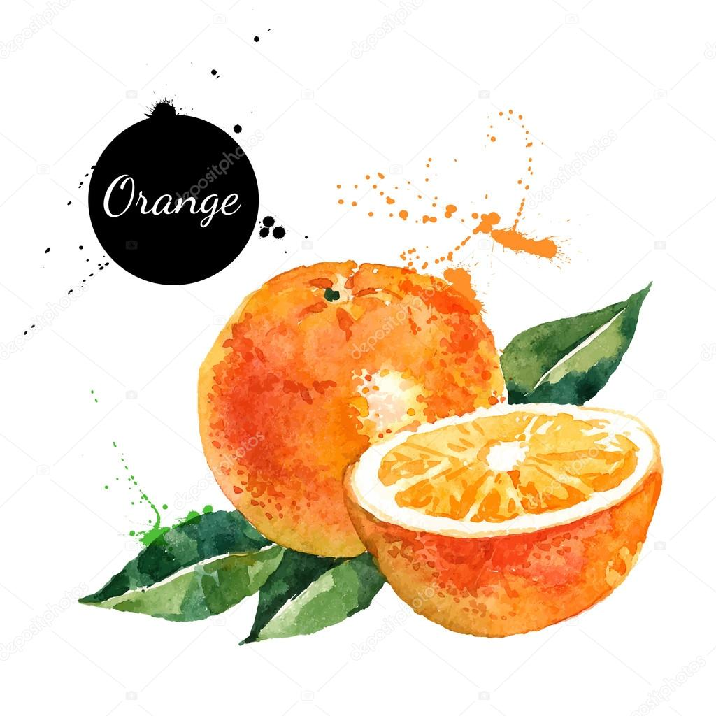 Hand drawn watercolor painting oranges