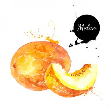 Hand drawn watercolor painting melon