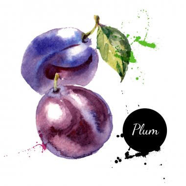 Hand drawn watercolor painting fruit plums