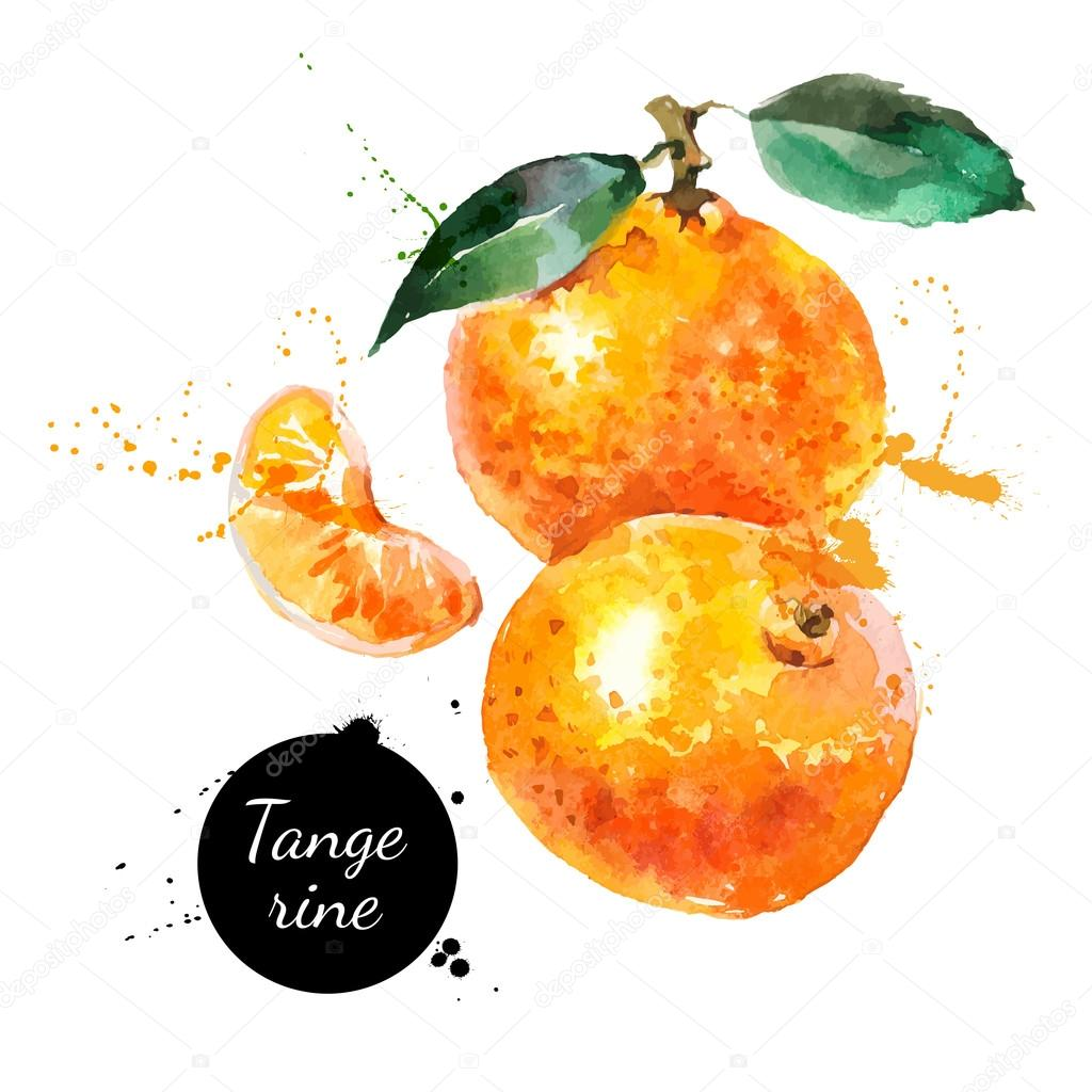 Hand drawn watercolor painting tangerines