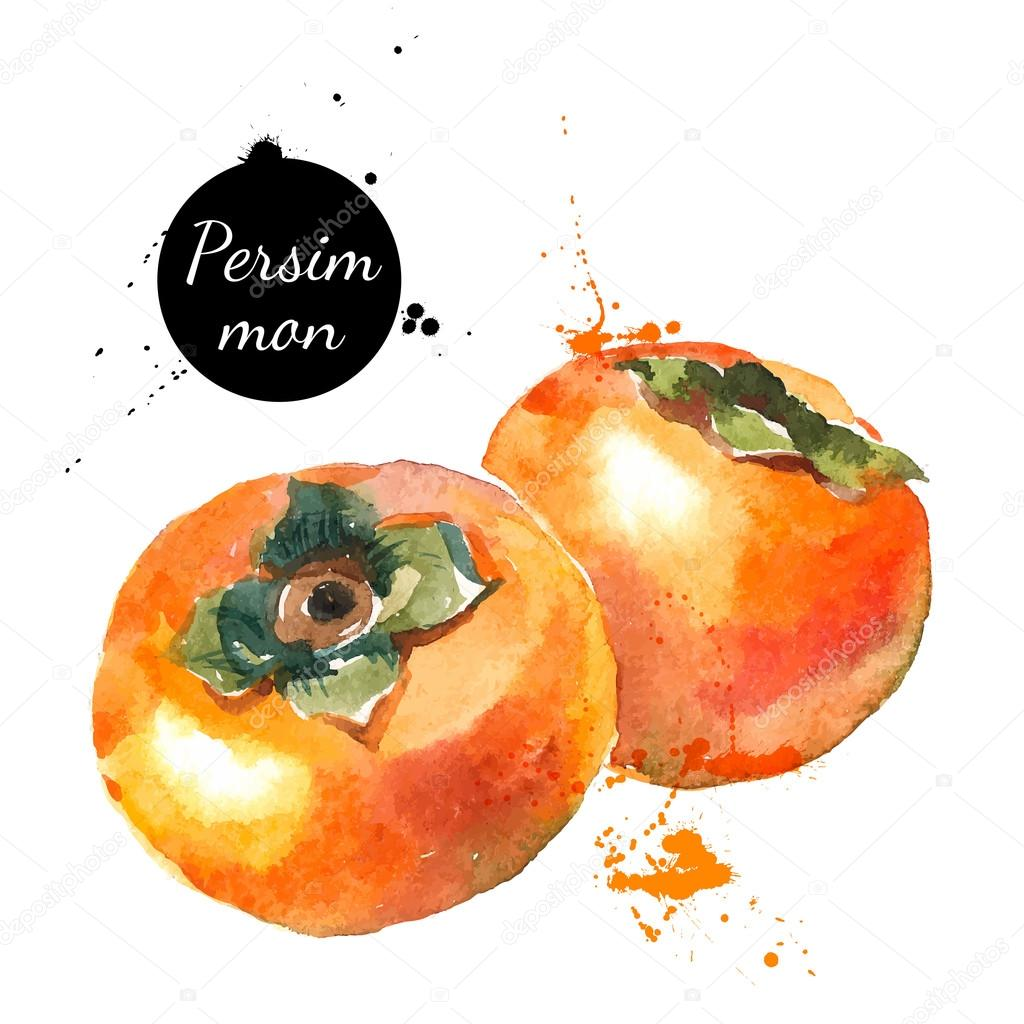 Hand drawn watercolor painting persimmons