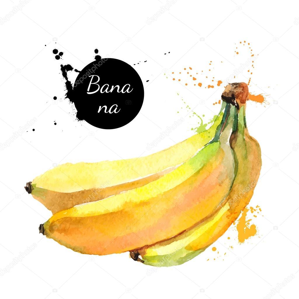 Hand drawn watercolor painting fruit bananas