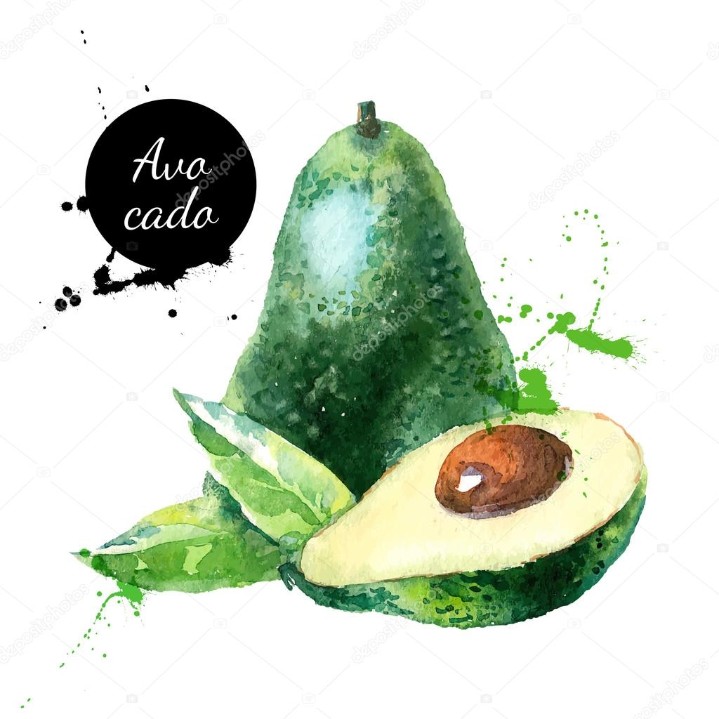 Hand drawn watercolor painting fruit avocado