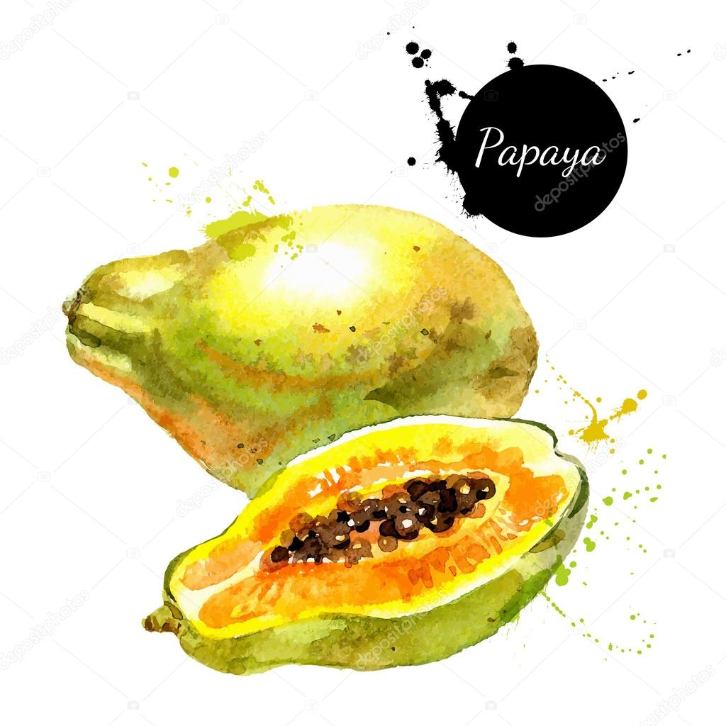 watercolor painting fruits papaya