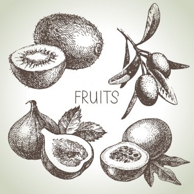 Hand drawn sketch fruits set.