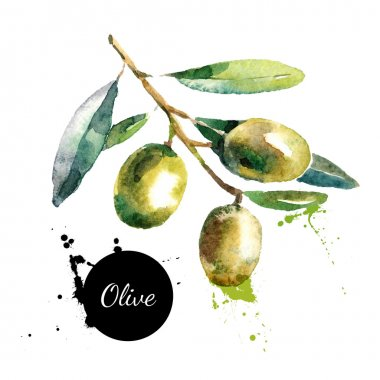 Hand drawn watercolor  olives