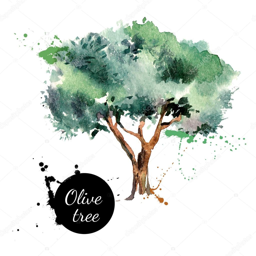 Olive tree vector illustration.