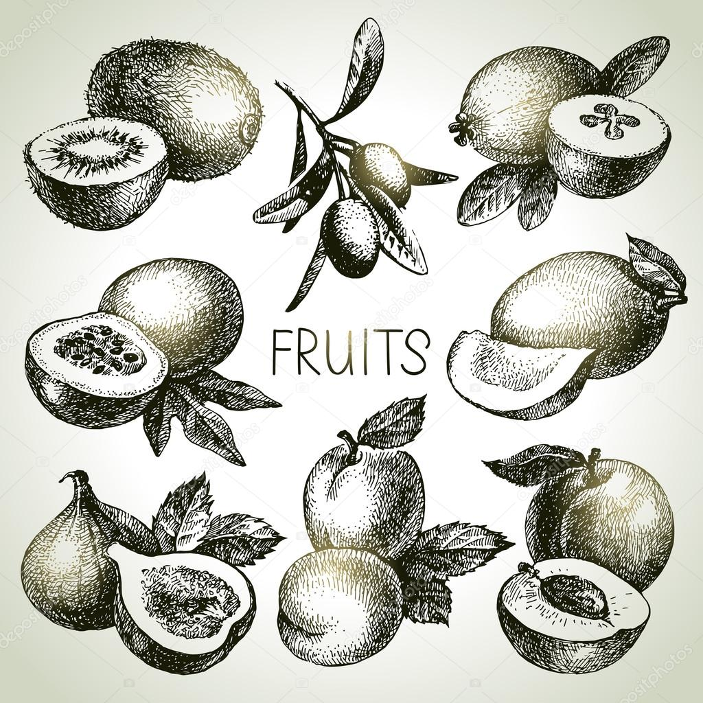 Hand drawn sketch fruits set. Eco foods. Vector illustration clipart vector