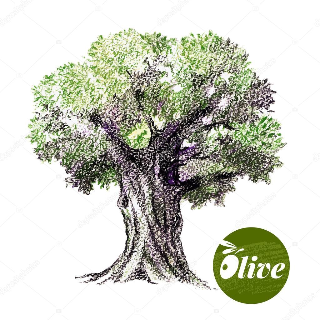 Olive tree illustration. — Stock Vector © pimonova #80448248