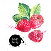 Photo Hand drawn watercolor painting raspberries