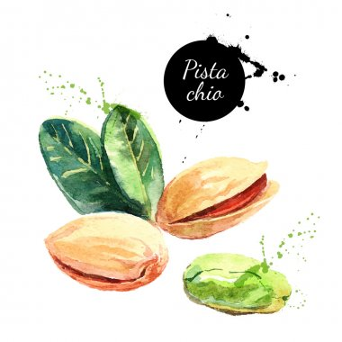 Hand drawn watercolor painting nuts