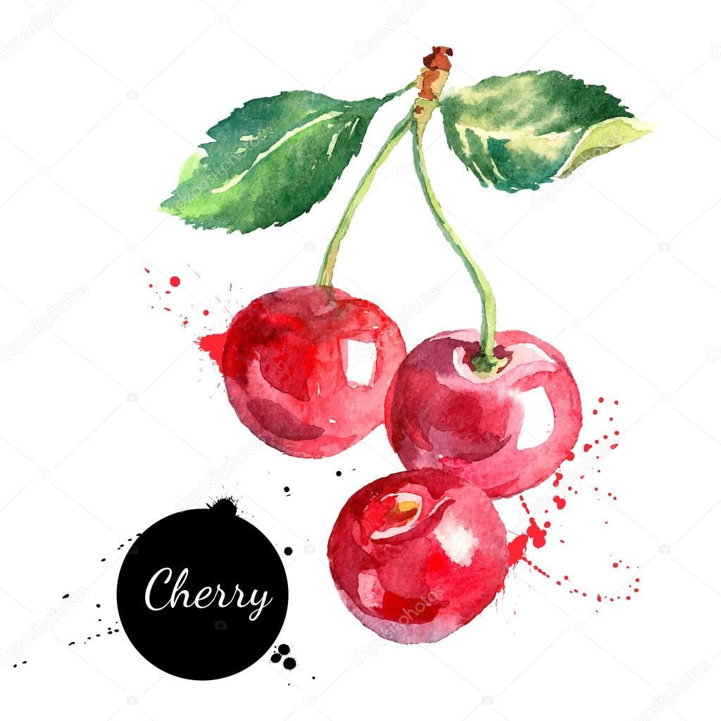 Hand drawn watercolor painting cherries