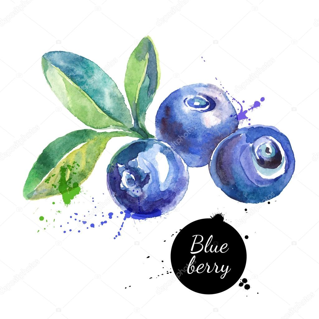 Hand drawn watercolor painting blueberries