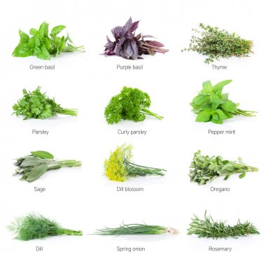 Fresh garden herbs set