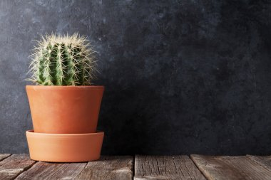 Cactus in front of chalk board