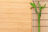 Bamboo plant and mat