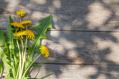 Dandelion flowers on garden table