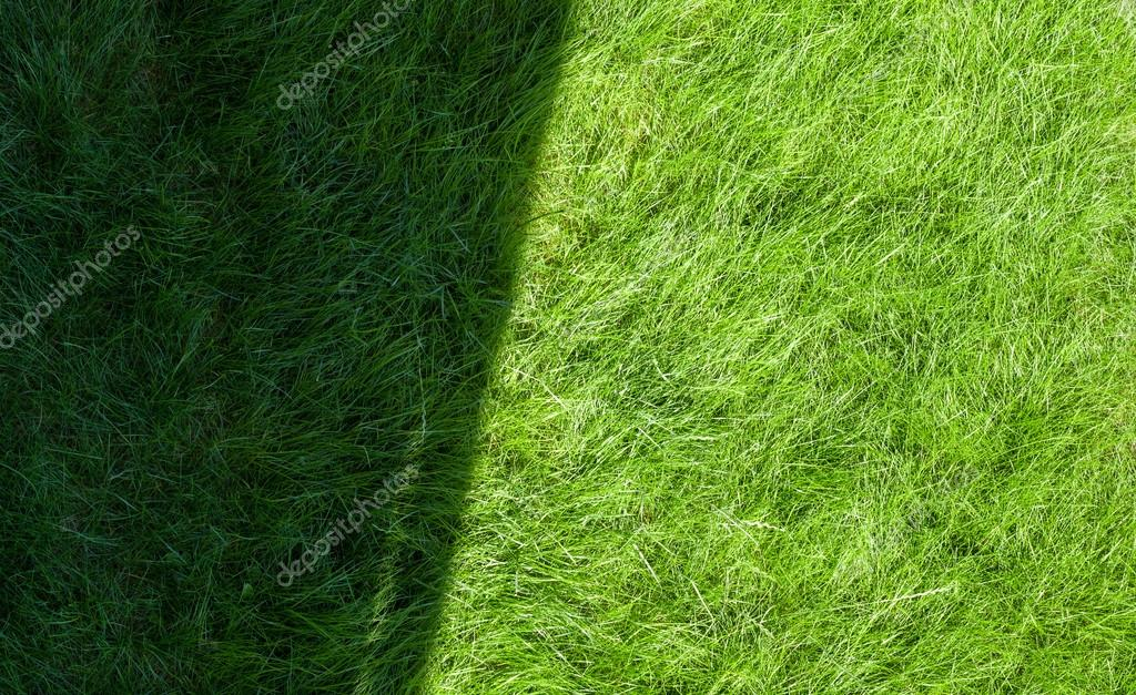 Green grass with shadow