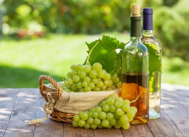 White wine bottles, vine and grapes