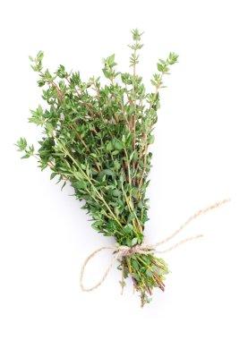 Fresh garden thyme herbs