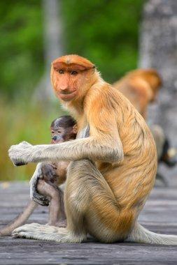 Female monkey  with baby